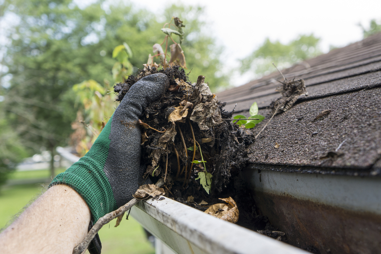 Cleaning gutters during the summer time.