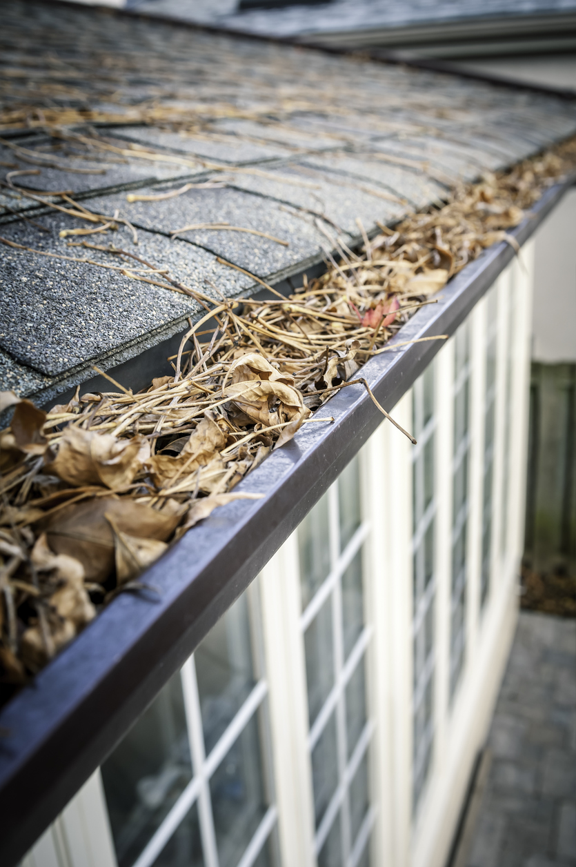 Eavestrough clogged with leaves - IV