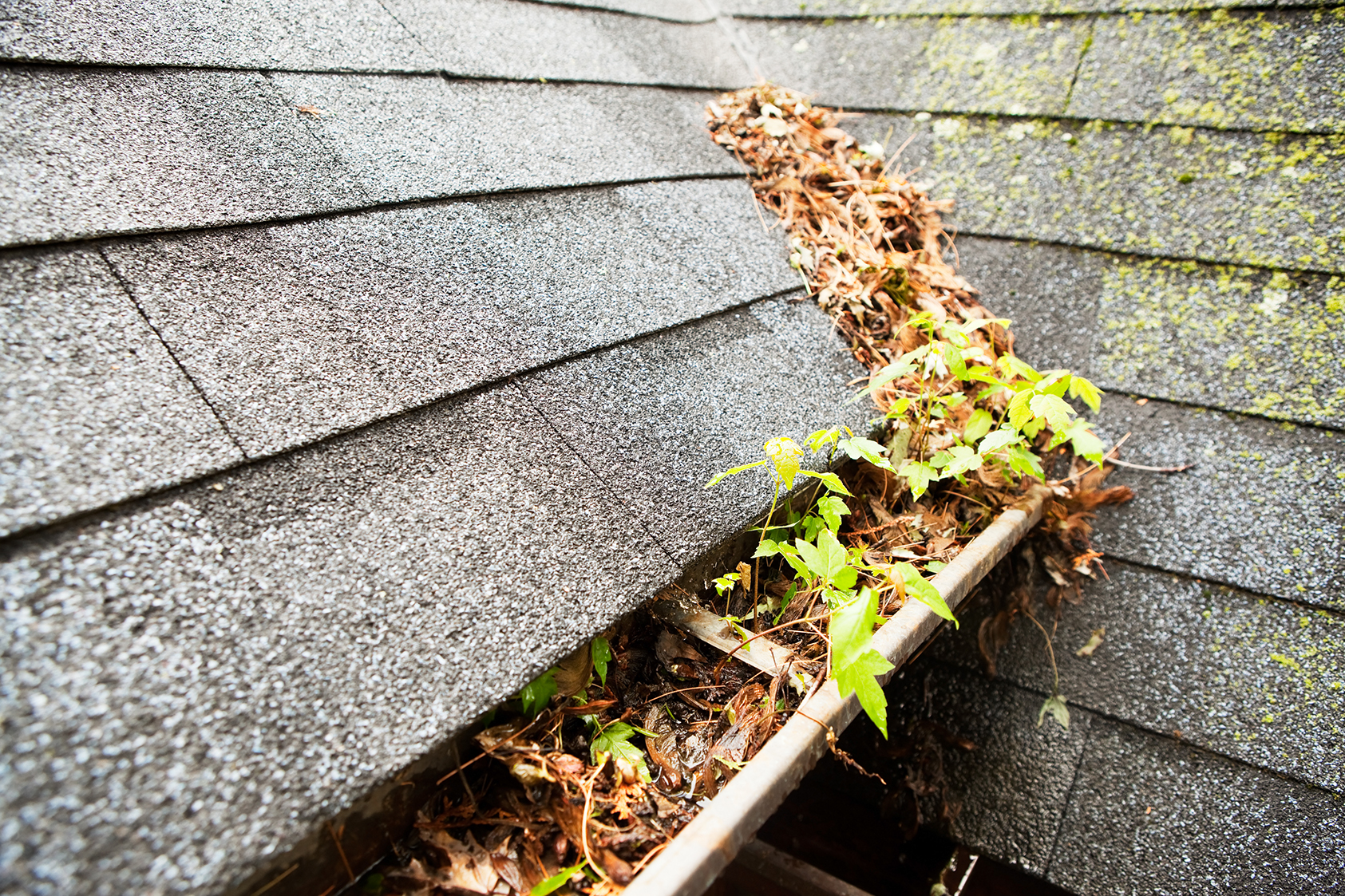 6 Common Gutter Problems Every Homeowner Should Be Aware Of