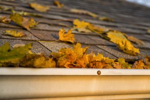 Autumn Leaves in the Gutter on a shingled roof of a house